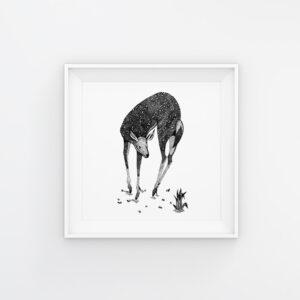 Oh Deer | Maitri Dalicha