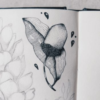 Acorn | Maitri Dalicha
