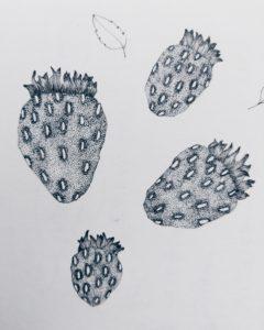 Strawberry 1 | Maitri Dalicha